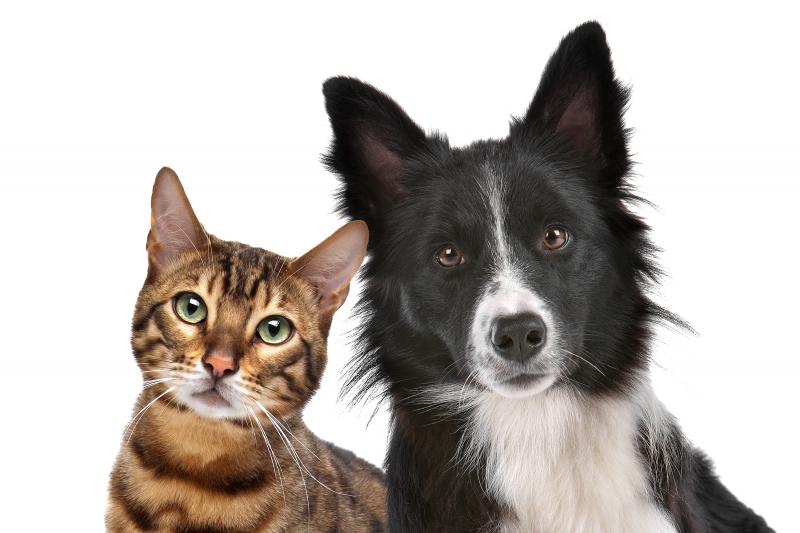 3387041-dog-and-cat